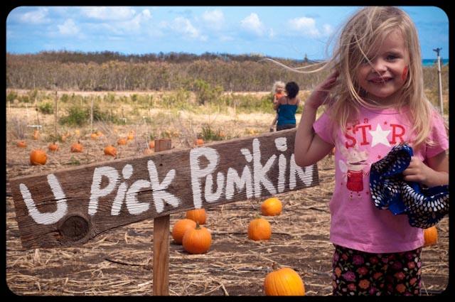 Pumpkin patch - 12 (1 of 1)