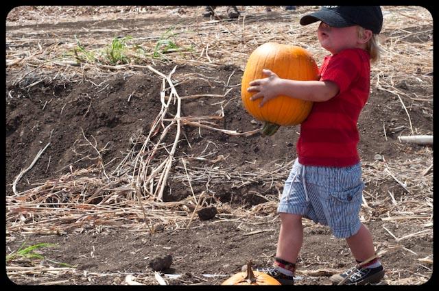 Pumpkin patch - 18 (1 of 1)
